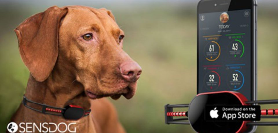 SensDog- Next Generation Smart Device for Dogs