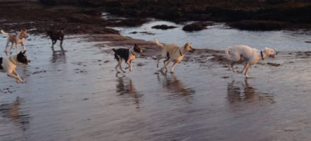 The influence of lifestyle on Bali dogs' behaviour