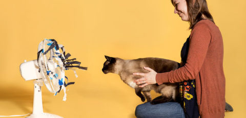 New article in Science Magazine on Cat Smarts