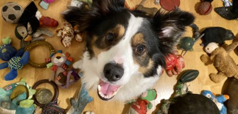 A special dog: Whisky's world