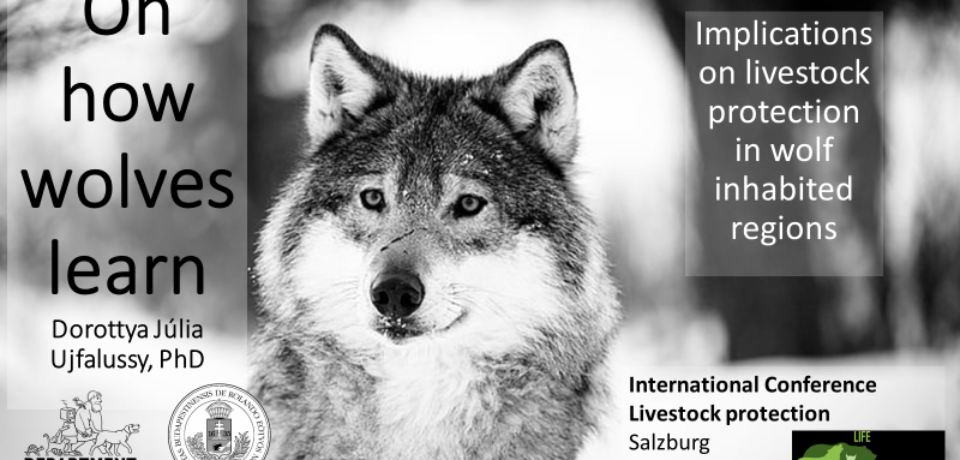 Returning wolves –GREAT! But how to keep conflict to a minimum?