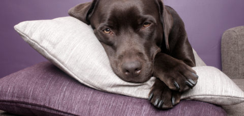 """First-night effect"" in dogs How well would you sleep in a sleep lab?"