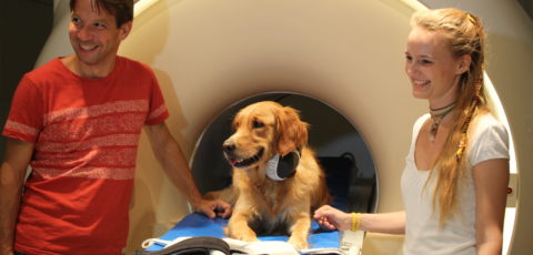 Speech processing hierarchy in the dog brain
