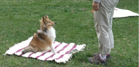 I, the obstacle – dogs show body-awareness, a new component of mental self-representation