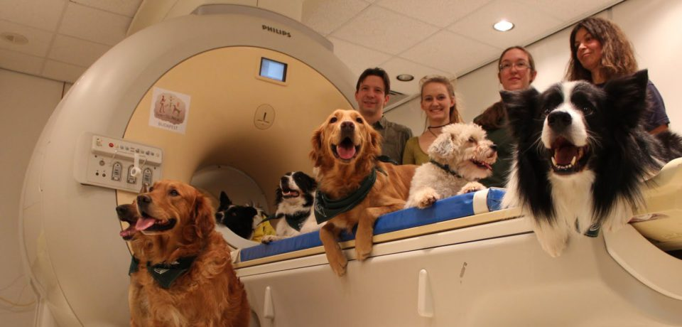 Dog brains process both what we say and how we say it