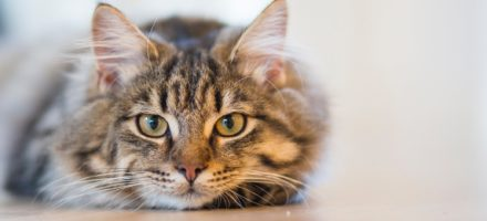 New study about cats' social understanding capacity