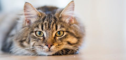 Companion cats – as their owners see them
