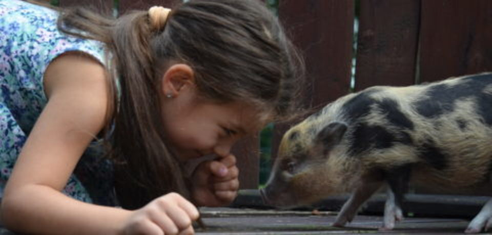 Pet pigs and dogs on Natgeo