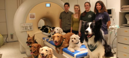 Are dog brains into human faces?