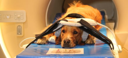Dog brains can detect who is talking