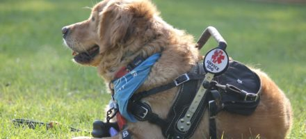 Assistance and therapy dogs are better problem solvers than both trained and untrained family dogs