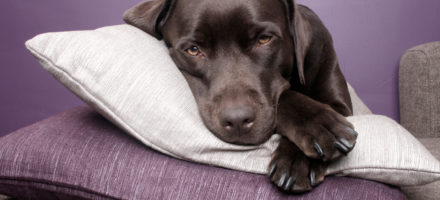 """""""First-night effect"""" in dogs How well would you sleep in a sleep lab?"""