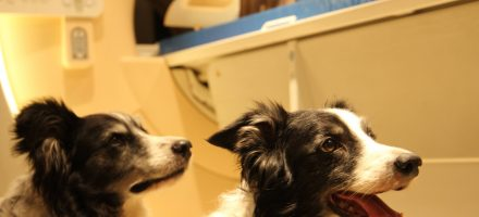 Dog and human brains process faces differently