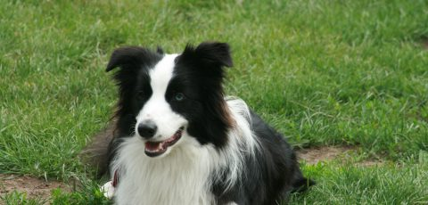 From puppyhood to senior age: Different personality traits age differently